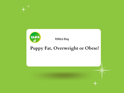 obesity_puppy_fat_overweight_rinka